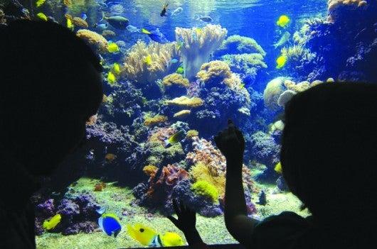 National Aquarium - Fish