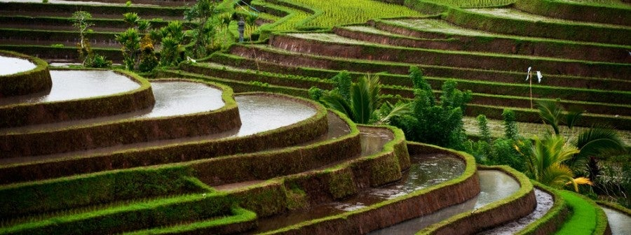 Asia Southeast rice terraces featured shutterstock 121249120