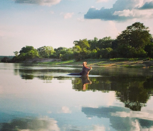 A hippo claiming his territory in the river near Tongabezi. Photo credit: Eric Rosen.