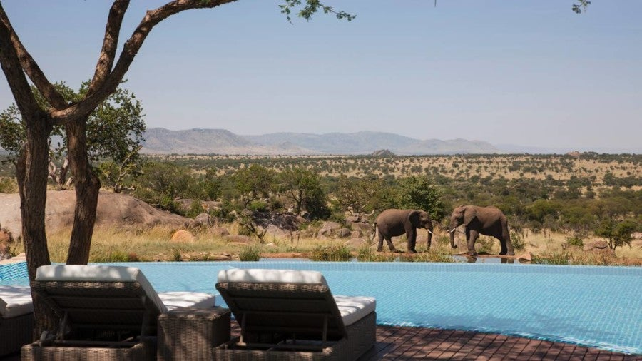 Swim with unique views of elephants