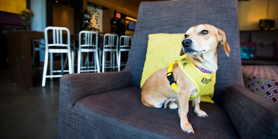 Bubbles up for adoption at The Aloft Hotel in downtown Asheville, NC