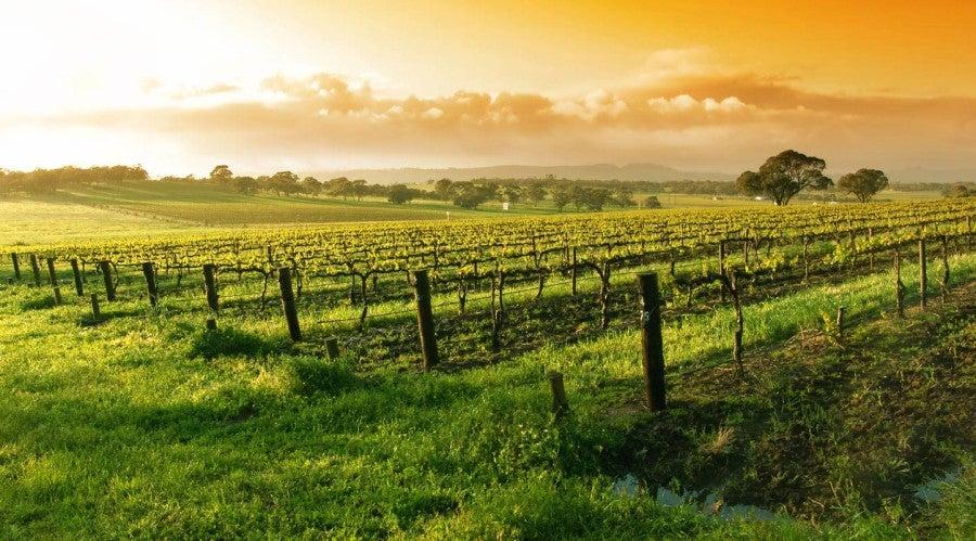 napa-valley-wine-tour