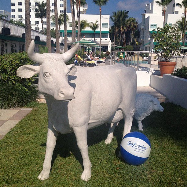 Kimpton's Surfcomber South Beach offers an awesome pool for cows — as well as the brand's signature pet amenities, all free of charge. Photo courtesy of the hotel.
