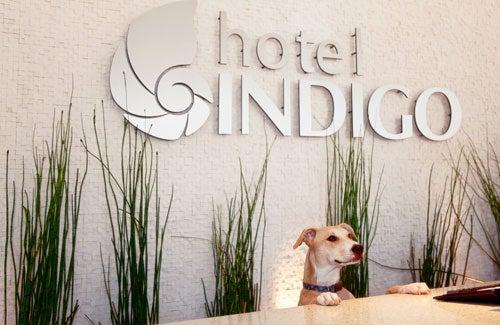 Dogs stay free at all Hotel Indigo properties — including Atlanta Midtown. Photo courtesy of Hotel Indigo.