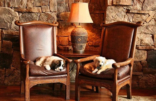 Dogs live the suite life at TheRitz-Carlton, San Francisco. Photo courtesy The Ritz-Carlton.