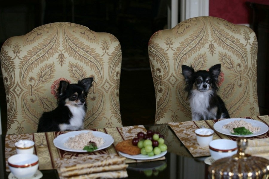 At the Towers, dogs can order from a gourmet canine room service menu. Photo courtesy of the Waldorf Astoria New York.
