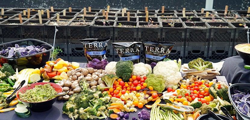 JetBlue terra Potato featured